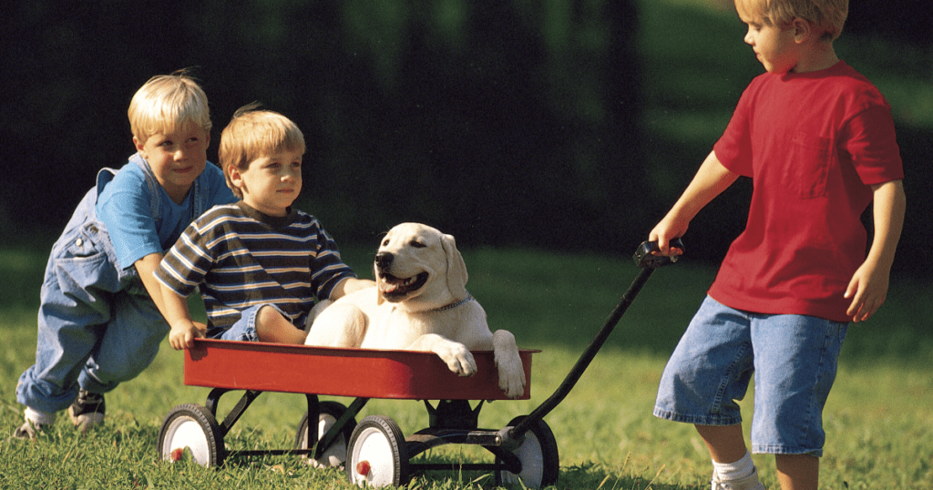 an image of young boys and a dog having fun using the best toddler wagon