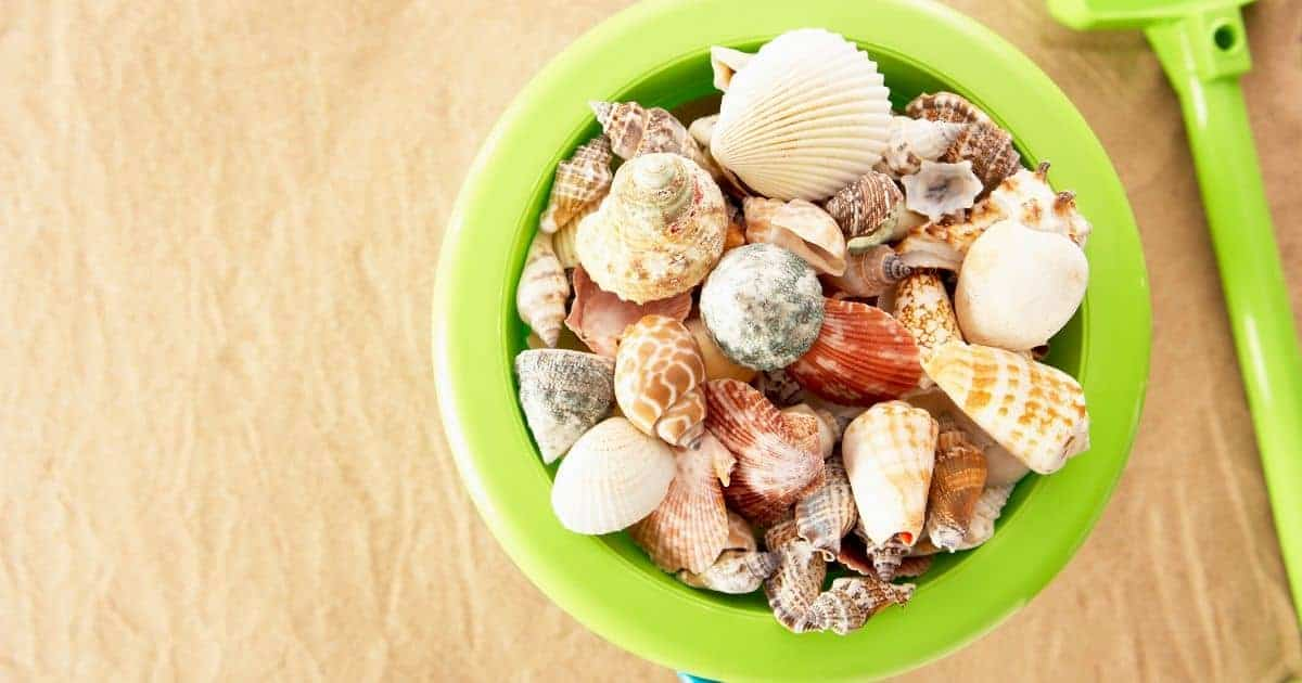 Unique Kids Seashell Crafts for All Ages